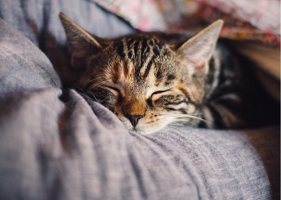 ベッド時間を快適にすればおうち時間がより楽しく